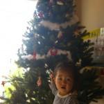 大好評!クリスマスツリー、予約受付中です♪