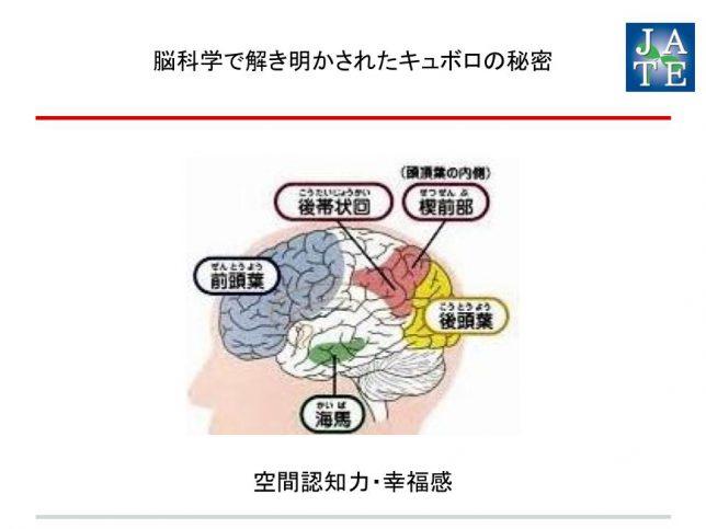 200922‗大西衆議院議員‗キュボロ・インストラクター資格_2006【プレゼン】 脳